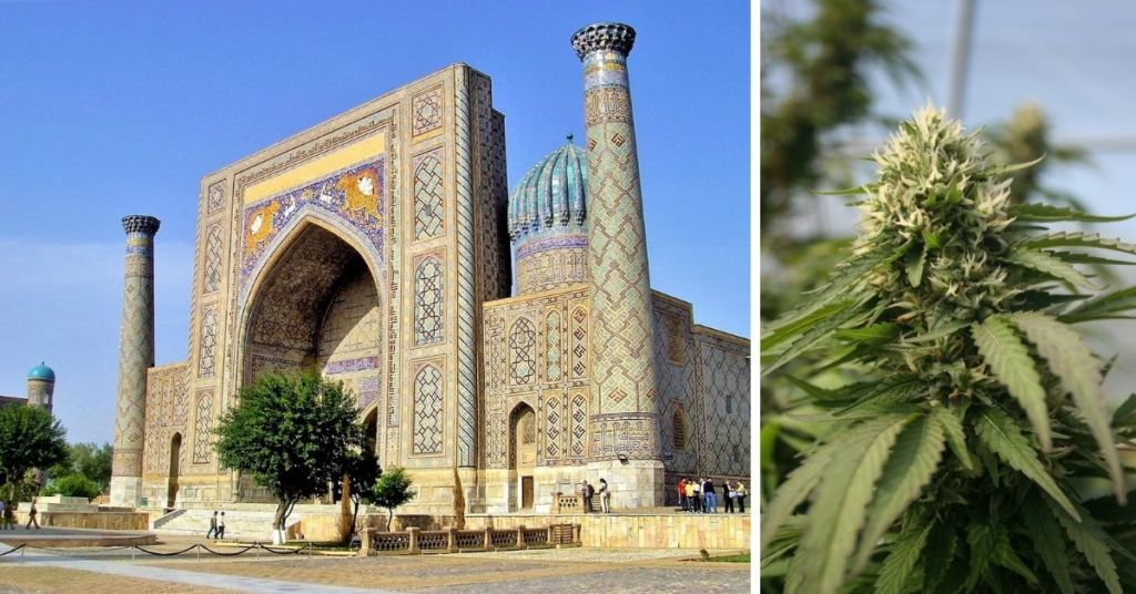Maltese Company Allowed To Grow Medical Cannabis In Uzbekistan In First For Central Asian Nation